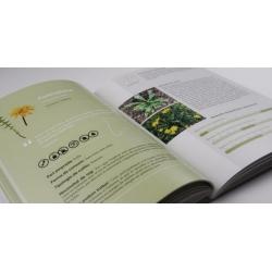 Llibre El llibre de les plantes silvestres comestibles. Volum 2